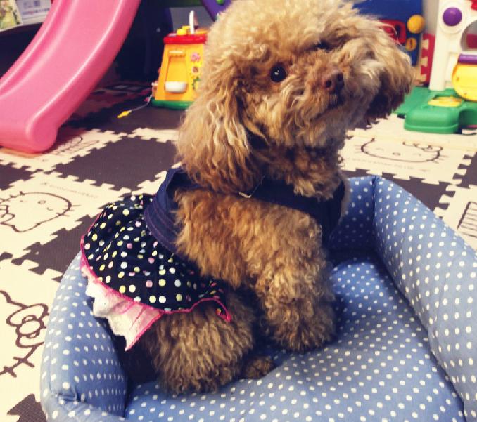 犬服・ドッグウェア・ドッグランラン・ペットショップ
